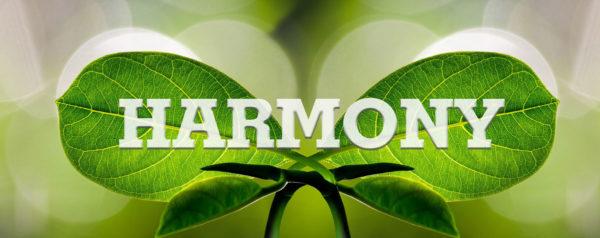 Mehr Harmonie ins Leben ziehen